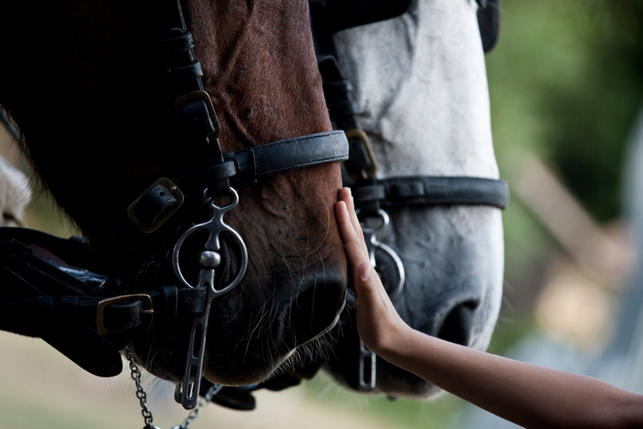 equine grief camp